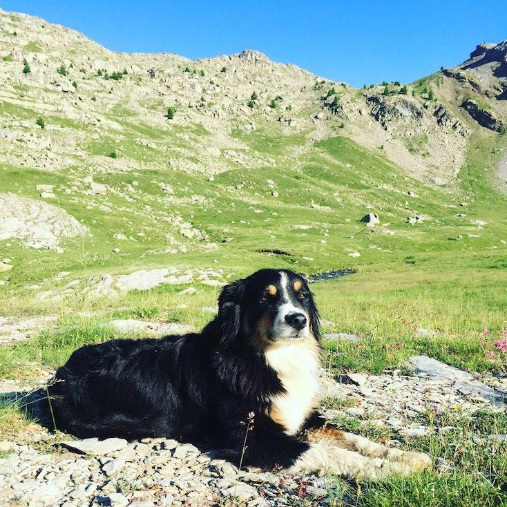Camping mit Hund Frankreich Roadtrip Alpen Pass Australian Shepherd