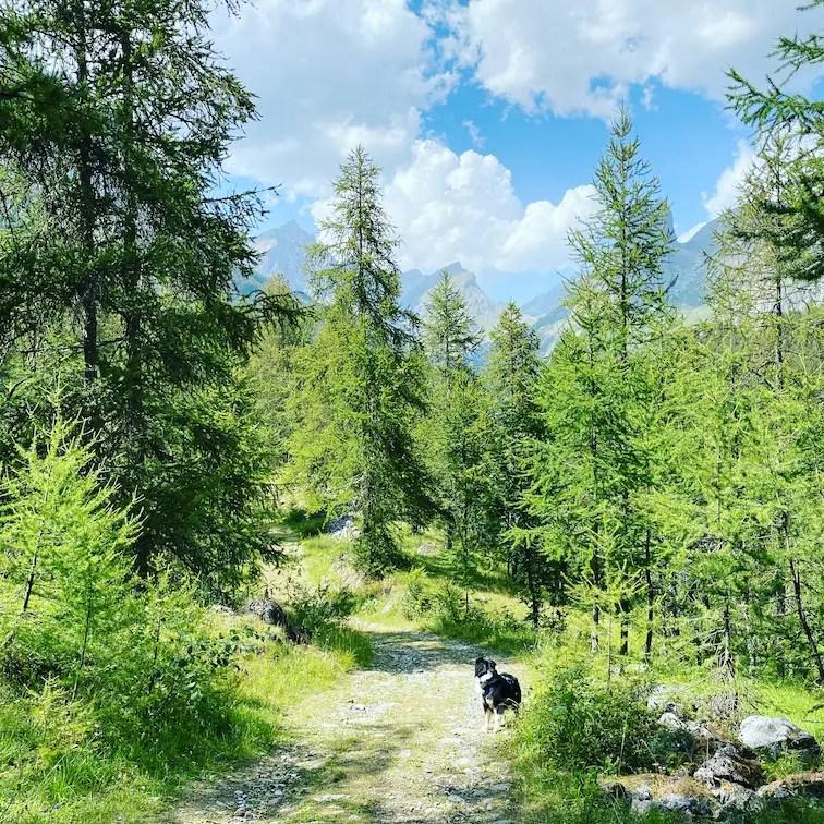 Valle Maira Wandern mit Hund Rundwanderung Saretto Australian Shepherd Wald