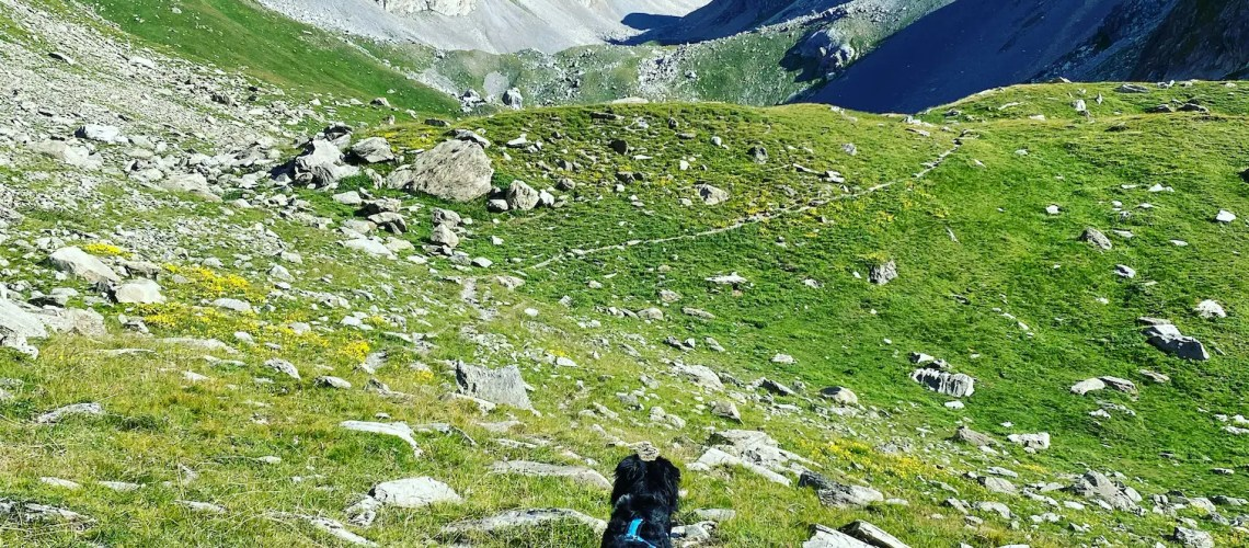 Valle Maira Wandern mit Hund Australian Shepherd Piemont Alpen Sentier Dino Icardi