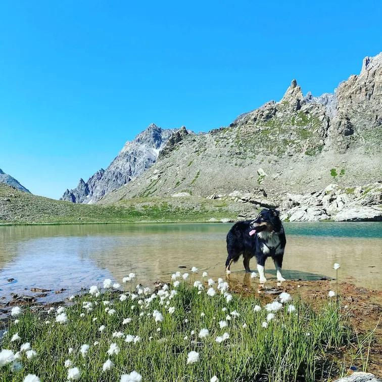 Valle Maira mit Hund Wanderung Piemont Lago della Finestra Bergsee Erfrischung