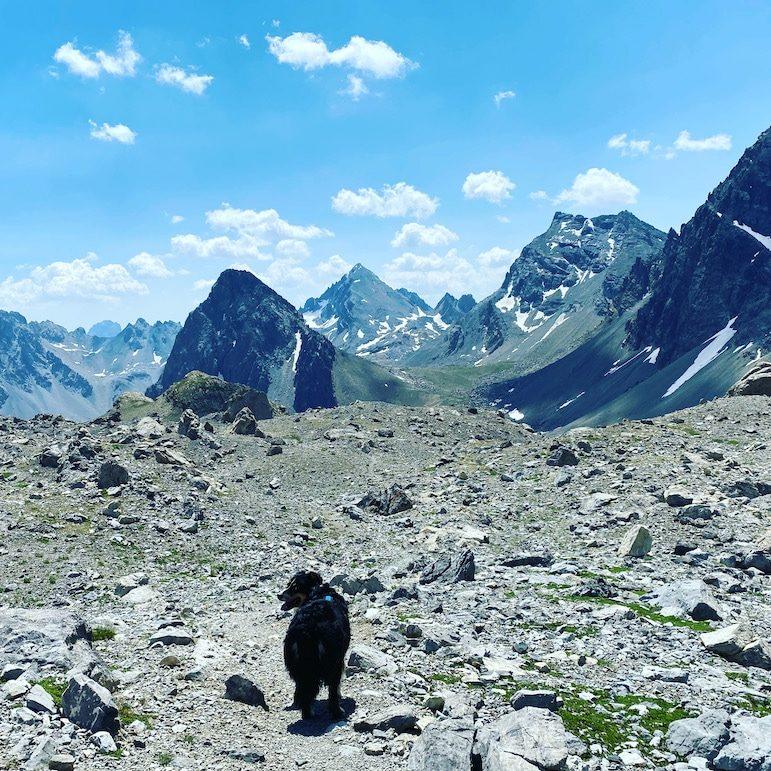 Sentiero Dino Icardi Cottische Alpen Piemont Wandern mit Hund Rundwanderung Trekking