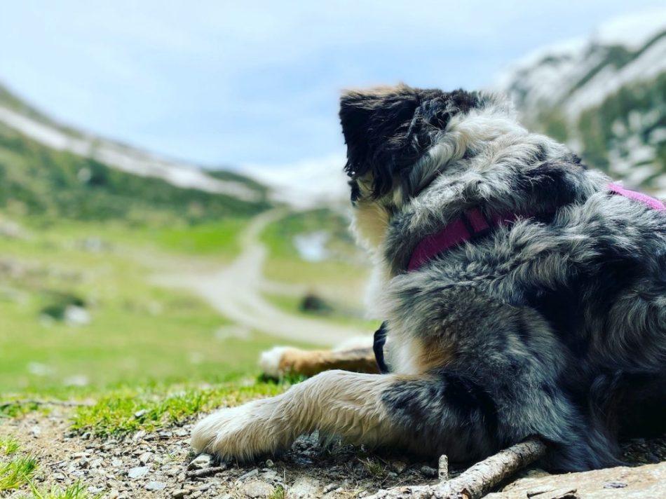 Solo Travel Camping mit Hund reisen Osttirol Villgratental  Wandern Österreich Wildcamping