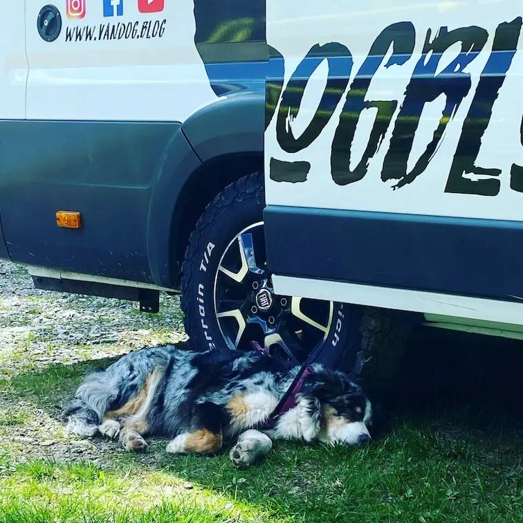 Reisen mit Hund Camping alter Hund Australian Shepherd Kastenwagen Roadtrip