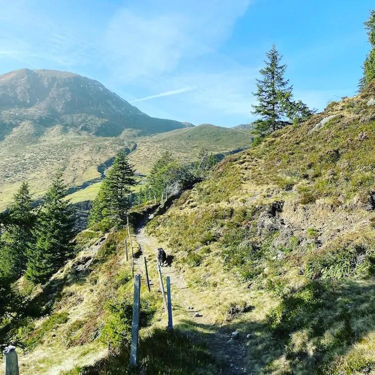 Kitzbüheler Alpen Lodron Wandern mit Hund Wanderung Herbst Windau Windautal Tirol