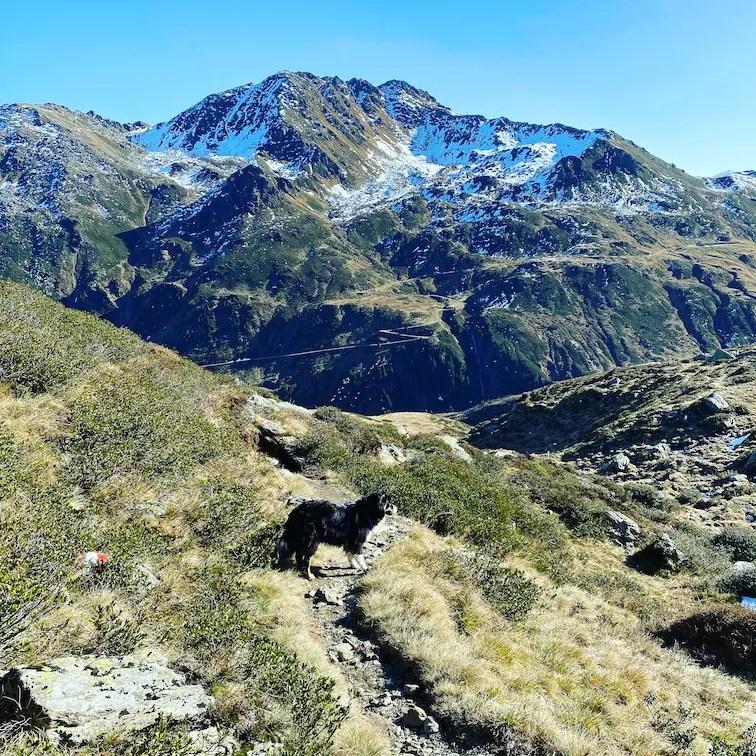 Kitzbüheler Alpen Wandern mit Hund Kelchsau Kurzer Grund Wildalmseen Schafsiedel Wanderung mit Hund Herbst