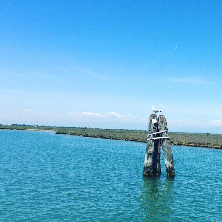 Laguna Nord Lagune von Venedig Motorboot Ausflug mit Hund Cavallino