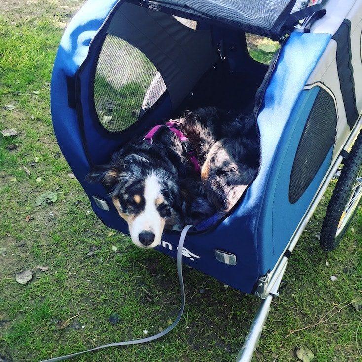 Anhänger Hund Fahrrad Fahrradtour