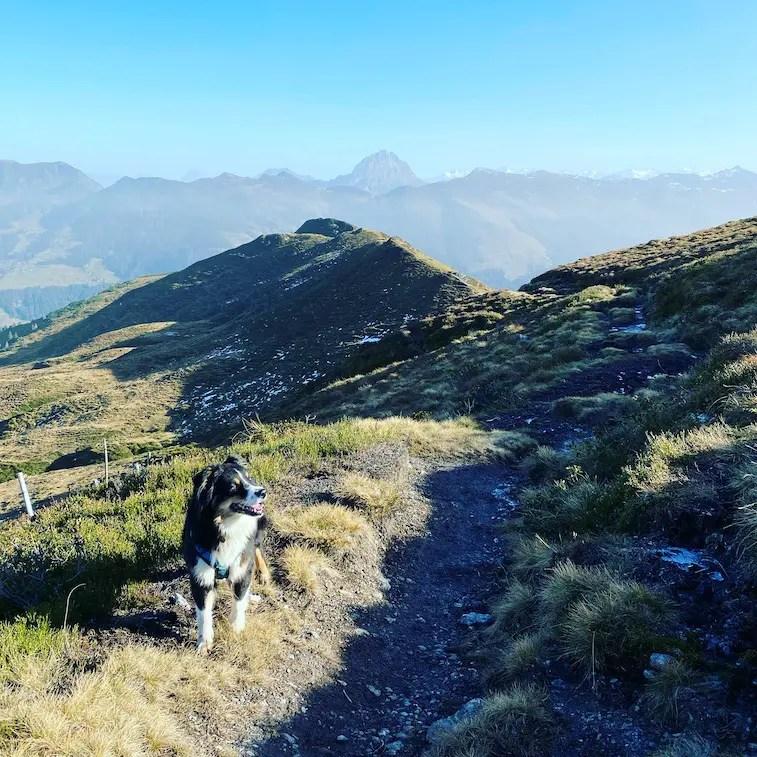 Kitzbüheler Alpen Wandern mit Hund Australian Shepherd Wanderung Tirol Brixental Herbst