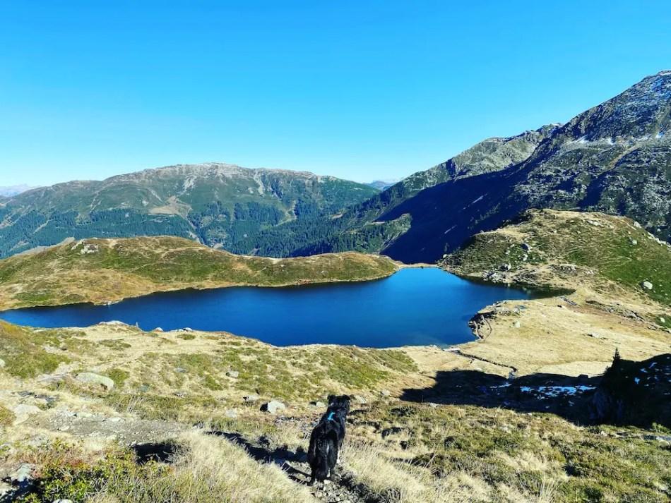 Kitzbüheler Alpen Brixental Kelchsau Kurzer Grund wandern mit Hund Wildalmsee Schafsiedel Herbst Wanderung