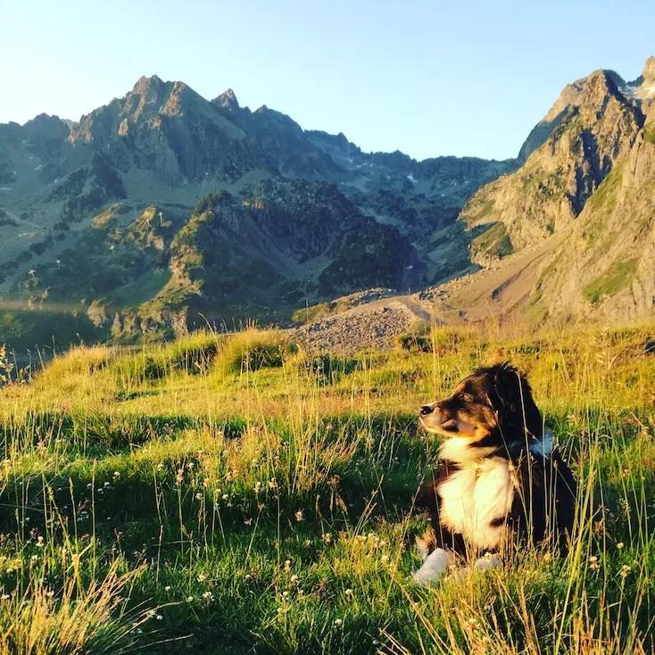 Packliste Camping mit Hund Reisen Wohnmobil Australian Shepherd