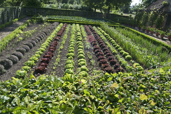 Hameau de la Reine - Perfection in a veg garden