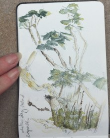 Watercolour Sketchbook 2 - Trees on Whitsunday Island. The leaves begin to emerge again