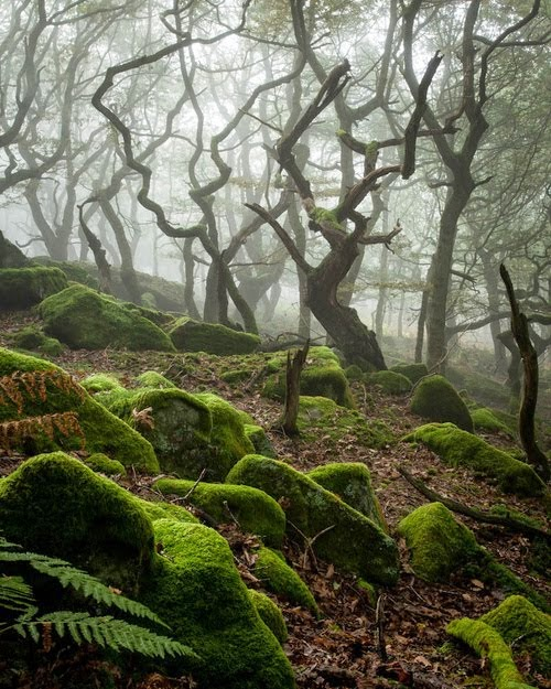Dark Forest, Peak District, England