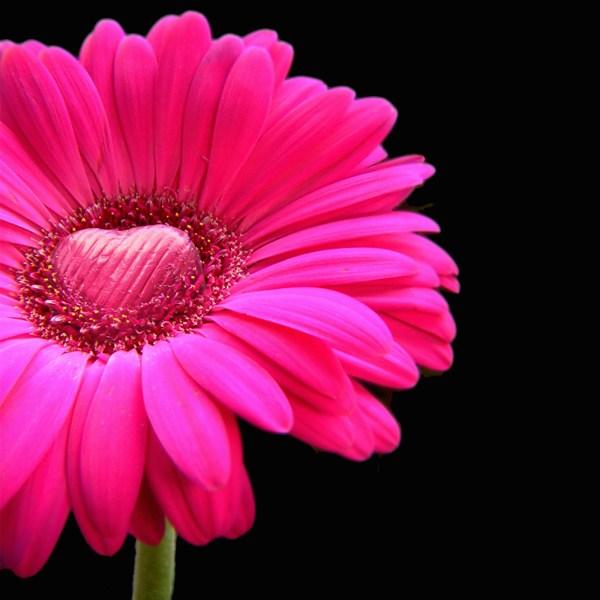 valentines day flower