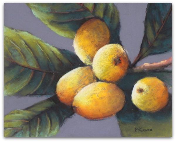 Loquats