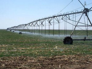 Irrigation, Kano farmers