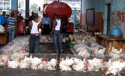 Agric-fowl