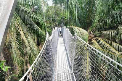 •The Canopy walkway
