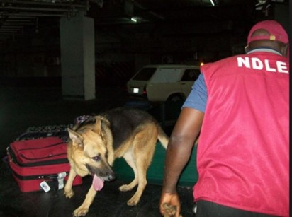 NDLEA arrests suspects with cocaine in Kano