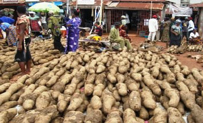 New yams flood Onitsha markets