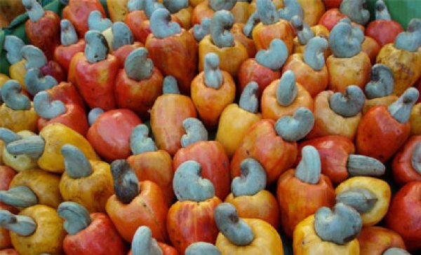 Nigeria loses billions to poor govt attention on cashew production ― Uzoechi