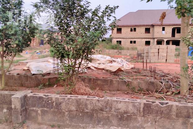 Abiola's Farms