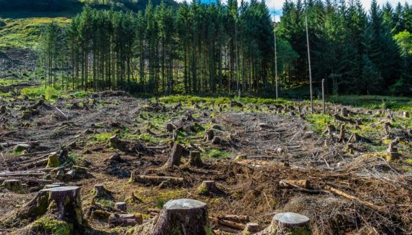 State govs now agents of deforestation, says HoCoN