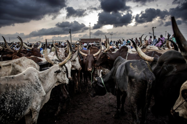 Borno, Kano partners on RUGA settlement project