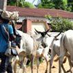 Herdsmen return to Nimbo, destroy farms, set ablaze farmers' settlements