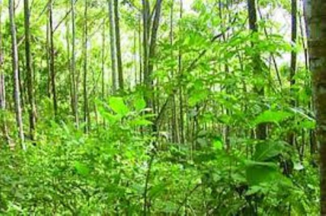 Climate change: NCF vows to establish 25% forest cover in Nigeria