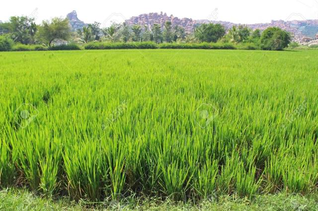 Biotechnology'll boost food production, create jobs — OFAB