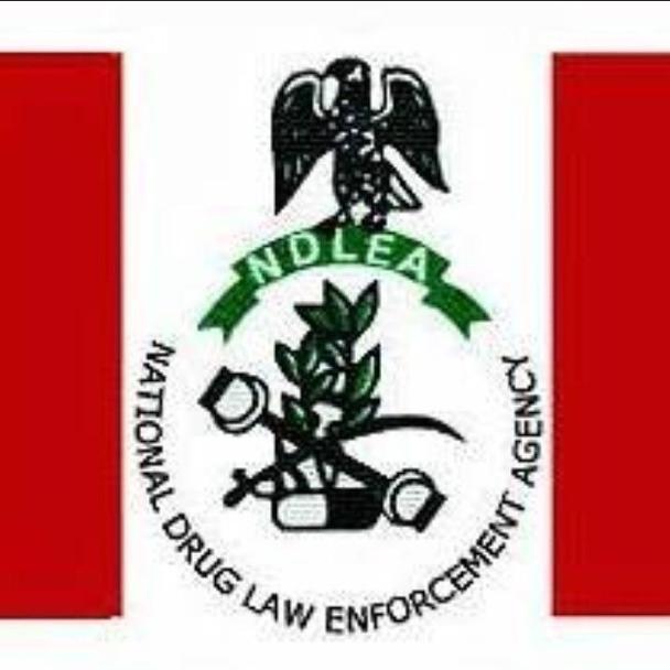 Kano anti-drug taskforce intercepts, handovers 53kg hemp to NDLEA