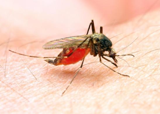 South Africa, Malaria