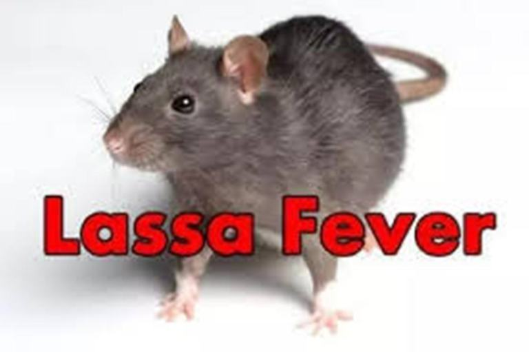 No Lassa fever in Niger, govt declares