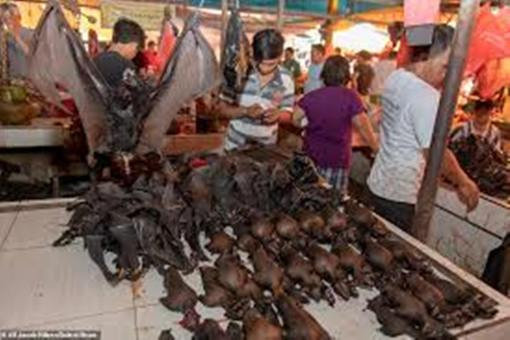 COVID-19: Indonesia city bans sales of bats, snakes