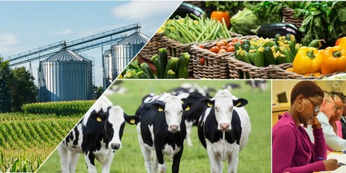 Unlocking productivity and investment opportunities across agribusiness value chain