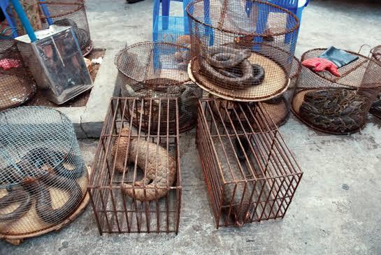 China, Wildlife, Coronavirus