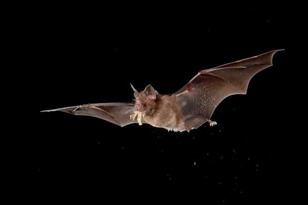 Wuhan lab had three live strains of bat coronavirus ?Chinese state media