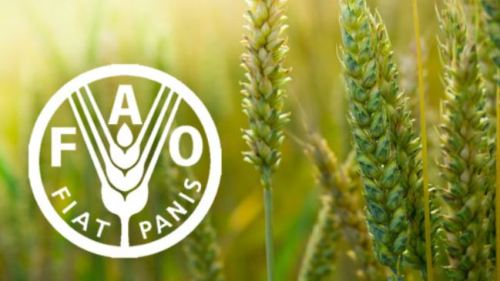 FAO urges African leaders on AfCFTA implementation to tackle post-COVID-19 food crisis
