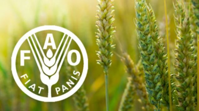 """The Food and Agriculture Organisation of the United Nations (FAO) on Monday says Nigeria has expressed its interest to join the Hand- in-Hand initiative to accelerate agricultural transformation and sustainable rural development.  Mr David Tsokar, FAO National Communication Officer, made this known in a statement in Abuja. The statement said that the country was ready to join the other 20 countries currently involved in this new initiative. """"There are incidents of floods in most parts of the country, where much of the food is produced, like we have in Kebbi state; we have also seen growing conflicts over land resources;  """" Yet many farmers still face challenges related to market access and these affect farming and food production.  According to the statement, the Hand-in-Hand initiative was launched in 2019 by FAO's Director General, Qu Dongyu, to support evidence-based, country-led and country-owned investments for eradicating poverty and ending hunger and all forms of malnutrition.  """"The initiative will help countries to develop independent investment plans to close food gaps, end malnutrition, support economic development and reduce environmental impacts with concrete evidence.  All of which will lead to the attainment of the Sustainable Development Goals particularly goals number one and two on poverty eradication and ending hunger,""""  The statement said that through the initiative, FAO would bring its technical expertise in all ares of its mandate, with emphasis on innovation and digital technologies.  FAO, however, assured commitment to support the country's development through the initiative, innovation digitalisation of agriculture and called for a quick ratification and domestication of pending international legal instruments.  According to the statement, the minister of Agriculture, Alhaji Sabo Nanono said the initiative was a good one and timely for the country to ensure food security and nutrition to all Nigerians.  """" Despite the plethora of challenges th"""