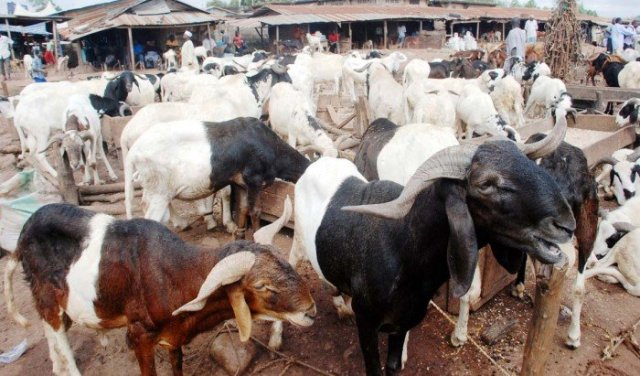 Sharing Sallah meat with Christians will builds peace — Sheik Maraya