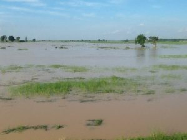 Kebbi rice farmers lost N1bn to flood — Official