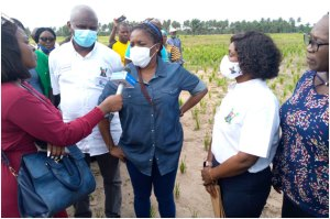 Abisola Olusanya: New advocate for agriculture