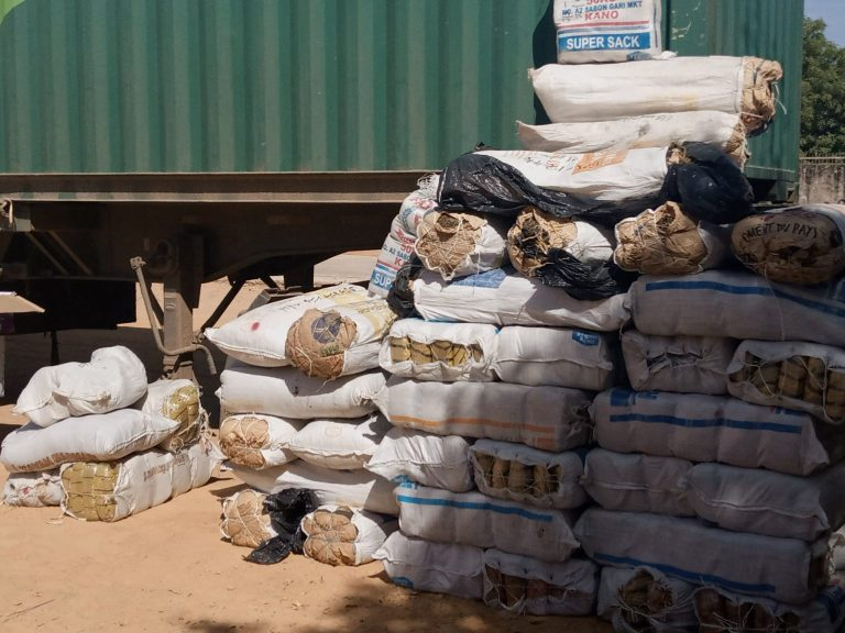 Female convict arrested with 576kg of India hemp in kano