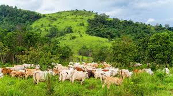 Nigeria cannot sustain open grazing — Governors