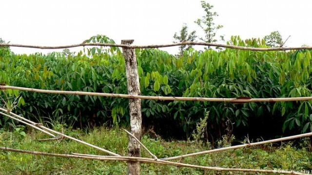 Family decries incursion into ancestral land in Epe