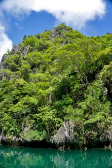 THE PHILIPPINES – A BACKPACKER'S GUIDE - Jungle everywhere