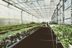 Urban Farmers Den Haag003