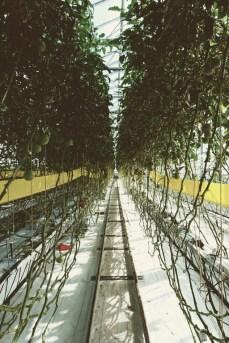 Urban Farmers Den Haag016