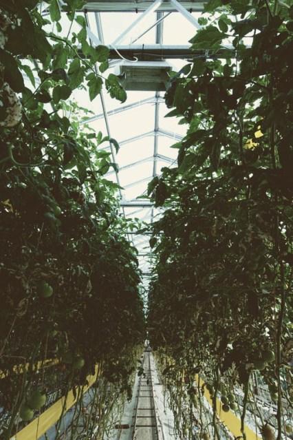 Urban Farmers Den Haag018